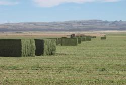 Image of large rectangular Alfalfa Bales