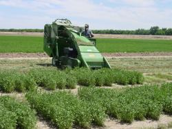Alfalfa Plot Harvest