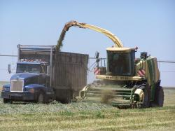 Image of triticale silage chopping
